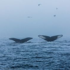 17 Happiest Science Facts - Humpback whales form lifelong friendships.