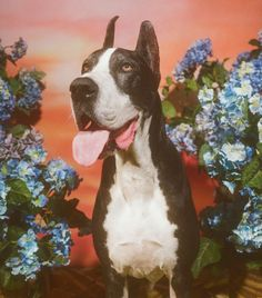 Meet the adorable dogs behind Gucci's new collection in honor of Chinese New Year. Petra Collins, First Art, Animals And Pets, Cute Animals, Dog Years, Beautiful Creatures, Fur Babies, Art Reference, Cute Dogs