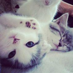 Dory (後ろはタバサ) #kitten #catsofinstagram  #catstagram #kitty #cat #cats #ねこ部 #ねこ #猫 - @sanchelove- #webstagram