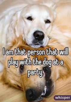 The dog makes the party!