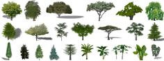 Google created a free 3-D design program called Sketchup? With it you can design your own landscapes, buildings, and other environments. This page is a resource for the plant components and includes a demonstration and tutorial.