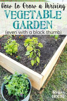 How to Plant a Thriving Vegetable Garden - Bless'er House