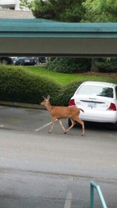 Oh deer :-)