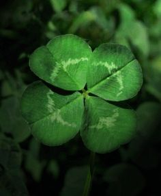 Trebol de cuatro hojas.Amuleto da sorte