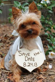 Wedding Save the Date Picture of Dog
