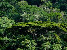 La forêt amazonienne en Guyane