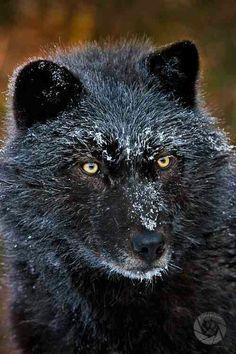 "Wolf on Twitter: "" https://t.co/SftvpfrX5y"""
