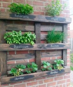 Ideas para tener un huerto en casa | Vertical Pallet Garden, Vertical Garden Planters, Herb Garden Pallet, Diy Herb Garden, Herb Planters, Vertical Gardens, Palette Herb Garden, Pallet Projects Diy Garden, Pallet Gardening