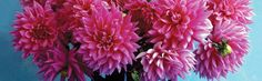 Flower Layers Petals Nice Yellow Nature Dahlia Large Gorgeous