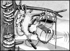 Possum Radio