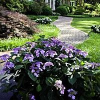 1000 images about different hydrangea types on pinterest. Black Bedroom Furniture Sets. Home Design Ideas