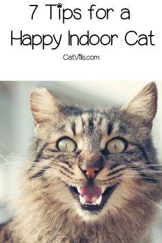 7 Tips for a Happy Indoor Cat