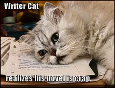 Post-MFA, Pre-MFA, or No MFA - Get Your Novel on a Realistic Path to Commercial Publication With Algonkian Writers Conference. Writing Advice, Writing A Book, Writing Studio, Saturday Humor, Writers Conference, Writers Write, Crazy Cat Lady, Crazy Cats