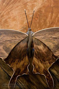 Brown   Buraun   Braun   Marrone   Brun   Marrón   Bruin   ブラウン   Colour   Texture   Pattern   Style   Joel Bright