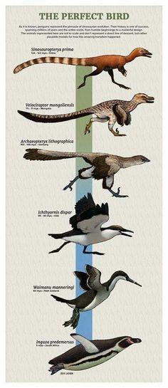 dinosaur to goose evolution Prehistoric Wildlife, Prehistoric Creatures, Extinct Animals, Extinct Birds, Jurassic Park World, Dinosaur Art, Animal Facts, Animals Beautiful, Mammals