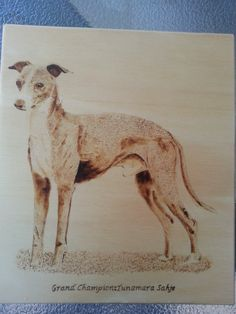 Commission. Minature Greyhound