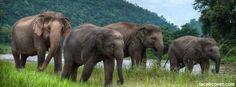 Elephant Facebook Cover