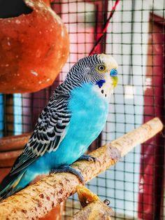 Photo by Fredrick john on Unsplash Free High Resolution Photos, Budgies, Dog Photos, Pet Birds, Mammals, Parrot, Adoption, Pets