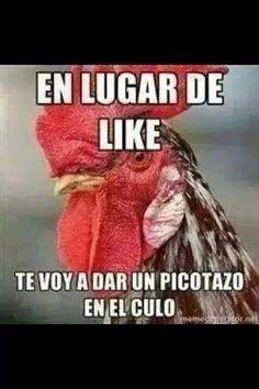 545 Mejores Imagenes De Memeton Funny Memes Hilarious Pictures Y
