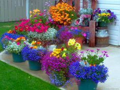 Love the colors in these container gardens