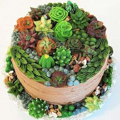 This week's Designer Spotlight goes to wonderful cake decorator Nanay Nikki for her mouth-watering Succulent Cake! Pretty Cakes, Cute Cakes, Beautiful Cakes, Amazing Cakes, Kaktus Cupcakes, Succulent Cupcakes, Fancy Cakes, Crazy Cakes, Cactus Cake