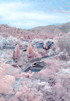 Yoshino, Nara, Japan. Apparently 30,000 cherry trees cover the mountain.