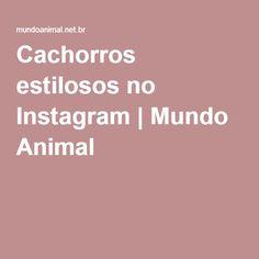 Cachorros estilosos no Instagram   Mundo Animal