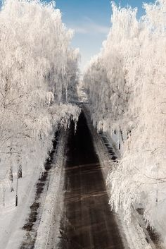 """Snowy Roadway - Winter I love what """"ice fog"""" does to the trees."""