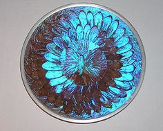Vintage Large Blue Morpho Butterfly Wing Plate Dish Wall Decor 9 1 ...