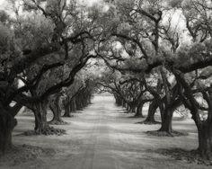 Avenue of Oaks by Beth Moon, art photography