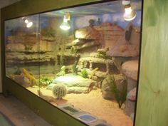 Custom Bearded #Dragon habitat.