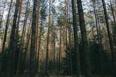20% Rabatt als Poster: Wald Bäume natur  Download auf Webseite!  Kategorien: landschaften, wald, bäume, natur, landschaft