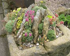 Crevice garden in a trough; Slack Top Nurseries and Garden, West Yorkshire, UK.