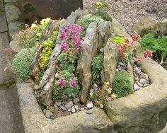 Crevice garden in a trough; Slack Top Nurseries and Garden, West Yorkshire, UK.