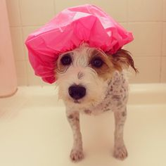 Poor Ginster has a cut inside of her ear, so we finally found a use for this shower cap to keep her ear dry while she has a shower. Now the cut in her ear is healing and she doesn't stink anymore. Yay! - @ginny_jrt- #webstagram