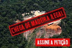 Resultado de imagem para devastação ambiental da floresta amazonica