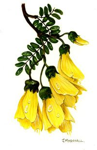 native nz flowers - Google Search