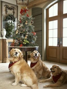 SEASONAL – CHRISTMAS – the magic of the holiday makes another appearance in classic greenwich style by rinfret, ltd. interior design and decorating at laurel hill. Christmas Animals, Christmas Dog, Southern Christmas, Christmas Humor, Merry Christmas, Dogs Golden Retriever, Golden Retrievers, Retriever Puppies, I Love Dogs