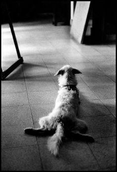 Risultati immagini per elliott erwitt and dogs