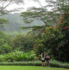 A couple takes in the verdant view  at Lyon Arboretum's Inspiration Point on the outskirts of Honolulu..  www.DaveDickey.net  #Hawaii www.WaikikiBeachHouse.com  #Waikiki