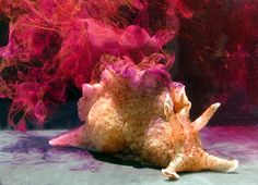 Sea Hare Ink Is One of Nature's Most Unusual Bioweapons. Sea hares are known for the colorful, sticky ink they let loose when knocked around by hungry predators (or mean humans). Scientists already knew a few ways this defense helped these squishy creatures escape the dinner plate. But new research reveals another purpose to the defensive ink, and it's unlike anything else seen in the animal kingdom.