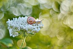 I Capture The Tiny World Of Snails In Poland | Bored Panda