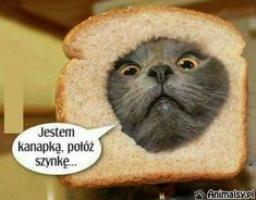 Top 45 funny animal pictures of all time with you. You will find photos of cute and funny animals in the list below. Cute Baby Animals, Animals And Pets, Funny Animals, Wtf Funny, Funny Cats, Funny Memes, Weekend Humor, Old Memes, Avatar