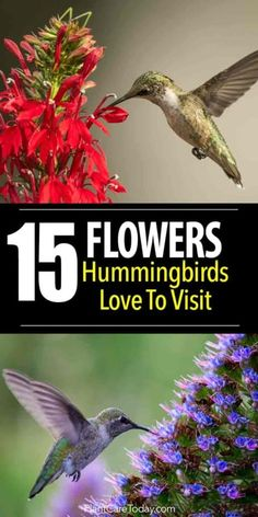 15 Flowers Hummingbirds Love To Visit What flowers do Hummingbirds love? There are dozens of flowers they visit but we share 15 flowers we call their favorites. [LEARN MORE] The post 15 Flowers Hummingbirds Love To Visit appeared first on Flowers Decor.