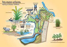 Landscape Design, Garden Design, Farm Cafe, Wordpress Theme, Farm Layout, Farm Projects, Farm Stay, Hydroponic Gardening, Farm Gardens