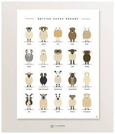 Ganado de ovino cartel animales de granja ovejas razas