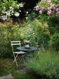 ✿ A rose affair ........Photo © H.Flont  -Roses  lavender
