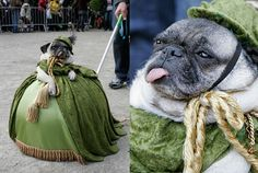 Pugs basically dog royalty. | 41 Reasons Why Pugs Are The Most Majestic Creatures On Earth