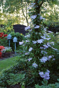 Roślin menażeria - Ogród 2015