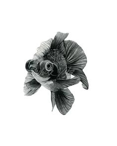 Goldfish illustration watercolor digital art prints zen